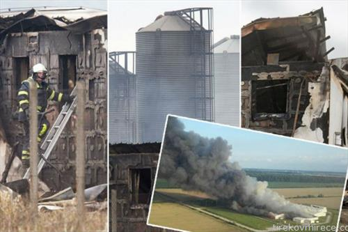во хрватска во пожар изгореа 10 илјади свињи