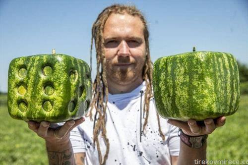 Унгарец одгледал коцки лубеници, едната дури е и со бројки