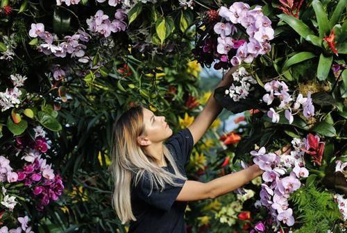 во Лондот изложба на орхидие со 7 илјади примероци