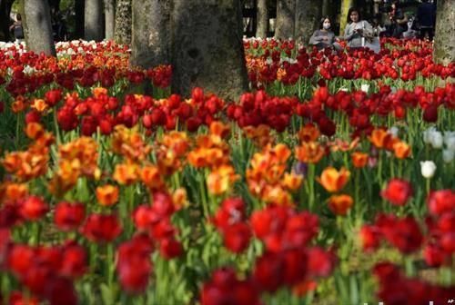 цветен парк со лалиња во Токио