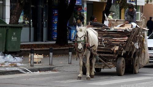 Рециклирано животарење во Скопје