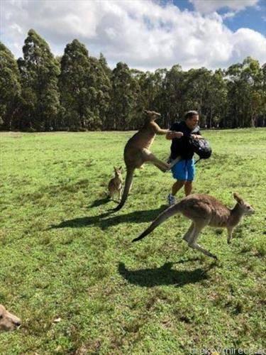 ги ранел кенгурите па го нападнаа