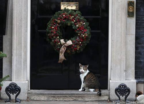 Мачката Лари стои на вратата од Даунинг стрит 10 во Лондон.