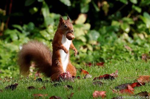 есенска слика во парк во Глазгов