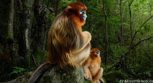 Златна двојка на Холанѓанецот Марсел ван Устен е прогласена за најдобра фотографија со диви животни, на светскиот избор што го организира Музејот за национална историја на Велика Британија