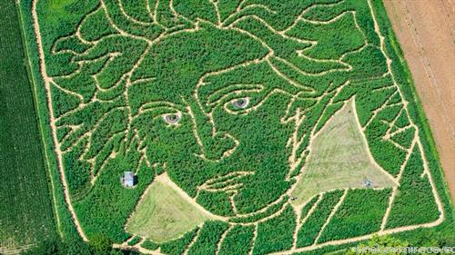 На поле покрај баварското езеро Амерзе,  лавиринт со лик на познатиот композитор Лудвиг ван Бетовен. Полето било посеано  во април. повод 250-годишнината од раѓањето