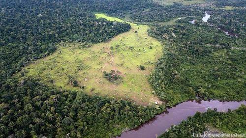 Секоја минута ширум светот исчезнуваат 30 фудбалски игралишта од тропска шума.
