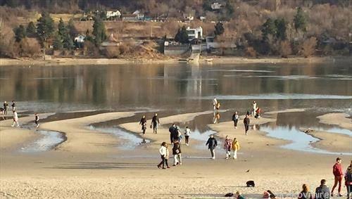 колку е широк Дунав кај Нови сад