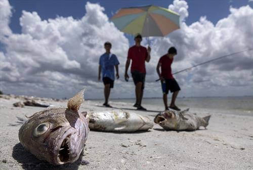 помор на риба во Флорида