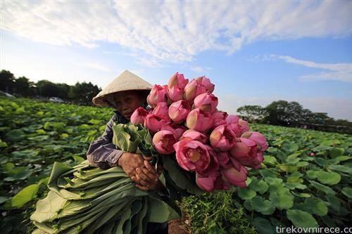 виетнамка бере лотус