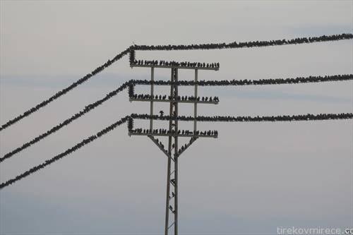 стотици птици на далновод во Јордан