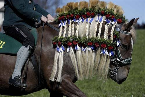 коња украсен за трка во Австрија