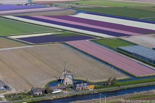полиња околу амстердам