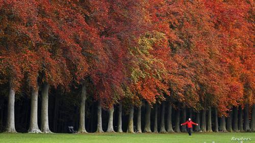 есен во парк од Брисел