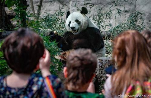 зоолошката во Москва се реотвори на 16-ти јунии