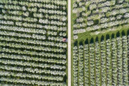 расцутени дрва во пролет од дрон, во германија
