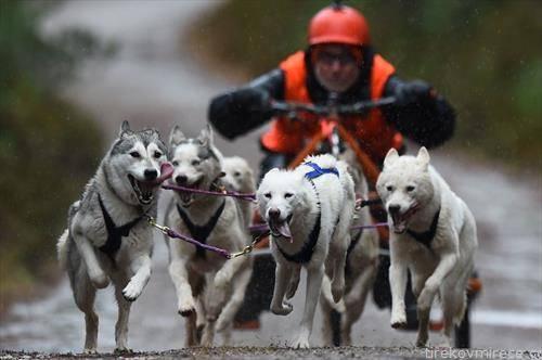 трка на кучиња во Англија