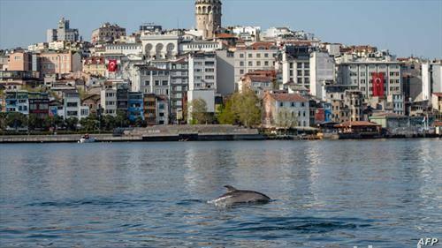 делфини во босфорот