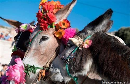 натпревар за најубаво магаре во Мароко
