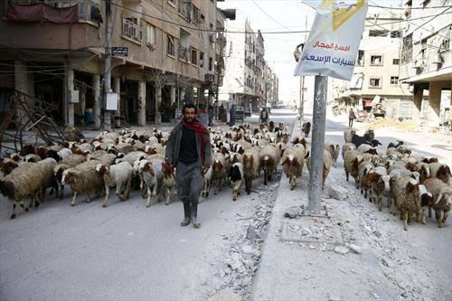 слика од разрушената Сирија, овци  наместо луѓе шетаат по улиците
