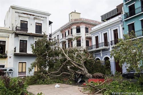 дрва паднаа каде никогаш не раснеле, Сан Хуан Доминиканска по ураганот  Марија