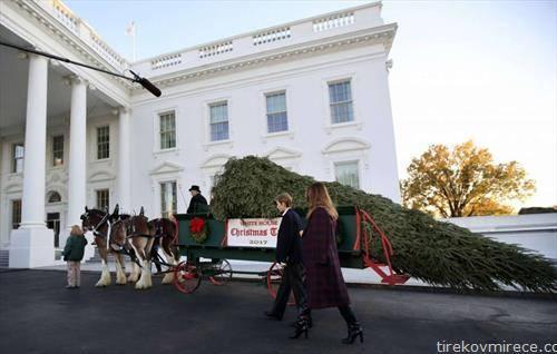 Претседателот и прва дама на САД ја добија елката, висока шест метри, која била подигната во фармата на Лари Смит во Њуланд, град во Северна Каролина