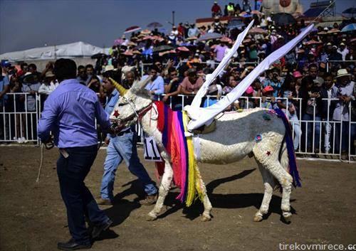фестивал на магариња во Мексико
