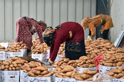 се продаваат компири на пазар во Либан