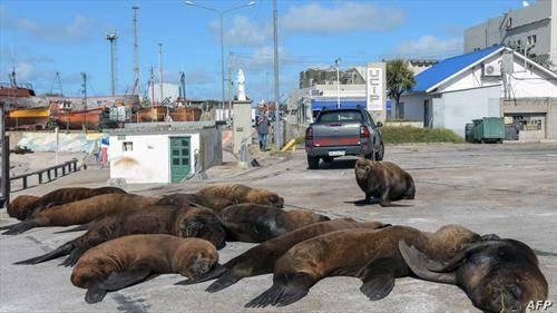 морски лавови се сончаат во аргентински град