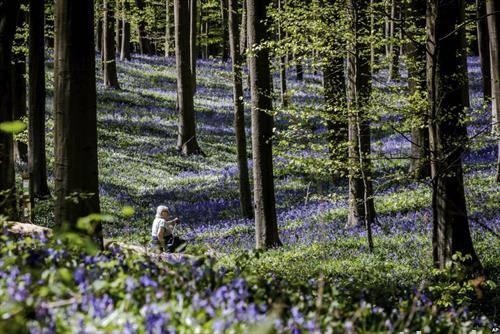 шума во Белгија