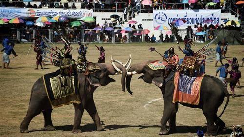 борба на слонови во Тајланд