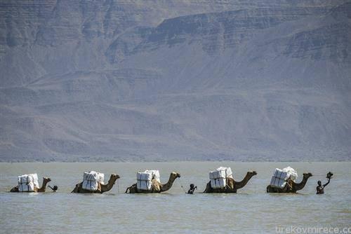 камили преку езеро во Етиопија