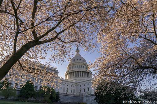 цветењето на јапонските цреши во Вашингтон