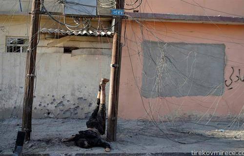 борец на ИСИС обесен во мосул