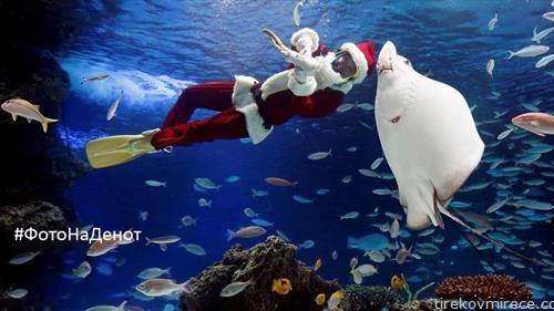 Саншајн Аквараиум во Токио, Јапонија. нуркачи облечени како Дедо Мраз ги хранат рибите во огромниот аквариум, полн со 240 тони вода има околу 1.400 риби