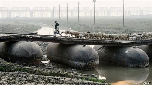 со стадото овци на понтонски мост во Индија