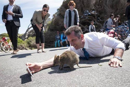 министерот за туризам на Австралија прави селфи со ретко животно, сродно на кенгурот