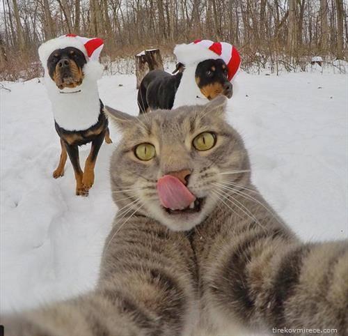 мачка со селфи