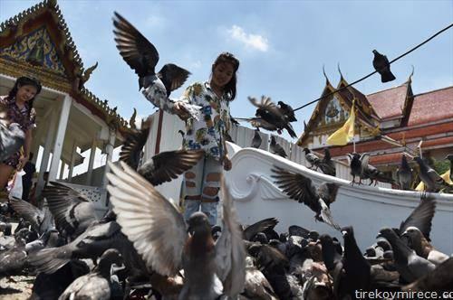дете со гулаби на плоштадот во Банког