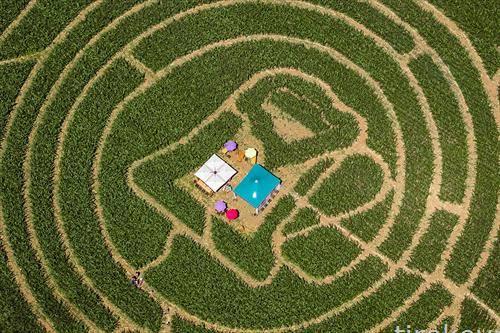 Полиња со пченка во Швајцарија