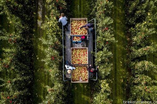 берба на јаболка во Холандија