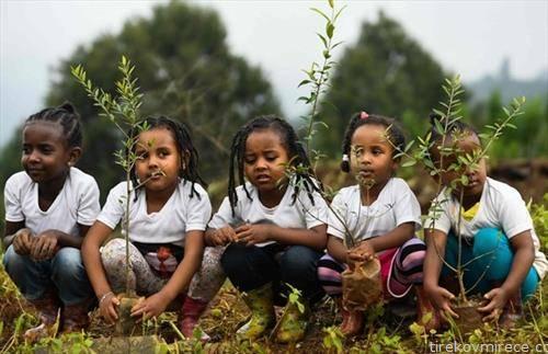 Етиопија во еден ден засади 350 милиони дрва