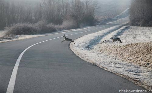 срни на пат во Хрватска