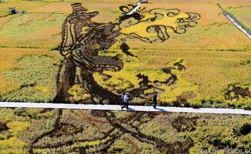 цртеж во Кина на поле со ориз