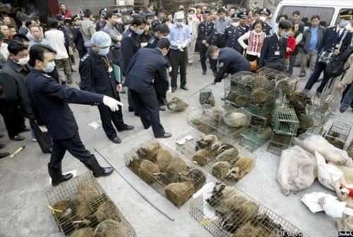 Кинескиот град Вухан, каде што избувна епидемијата на корона вирус на крајот од минатата година, забранета  е трговија со диви животни