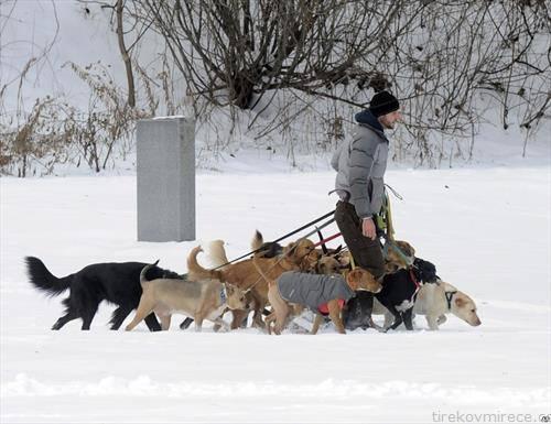 сопственик си ги шета 12 кучиња по снег во САД