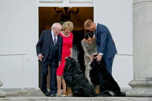 кучиња домашни миленици на ирскиот претседател