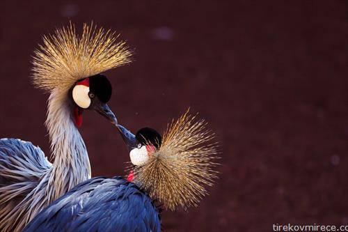 царски жерави во малага Шпанија