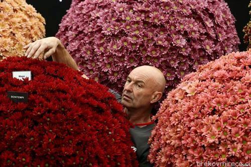 саем на цвеќе во Лондон