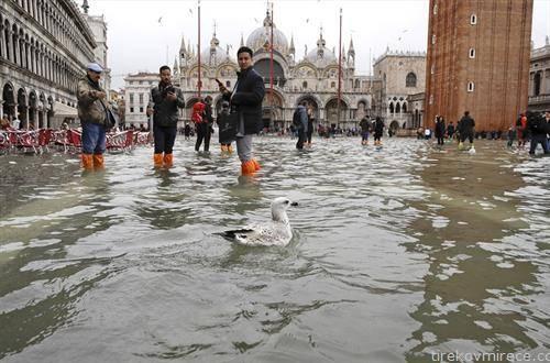 патка плови по надојдените води во Венеција